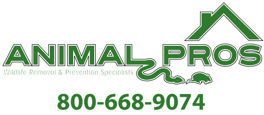 Animal Pros